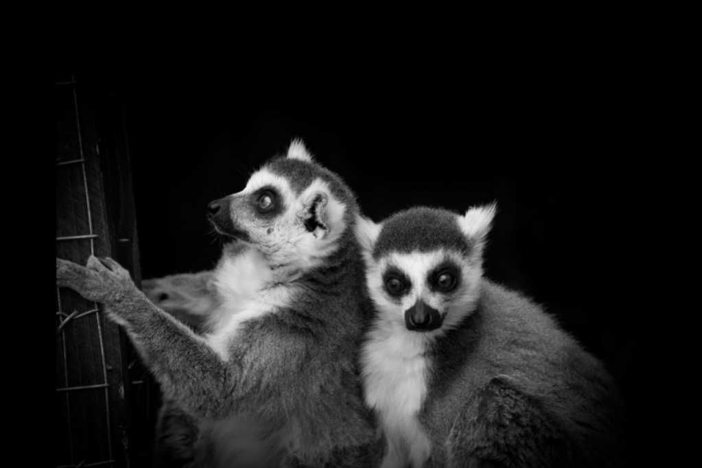 animalia project - Black & White Photography