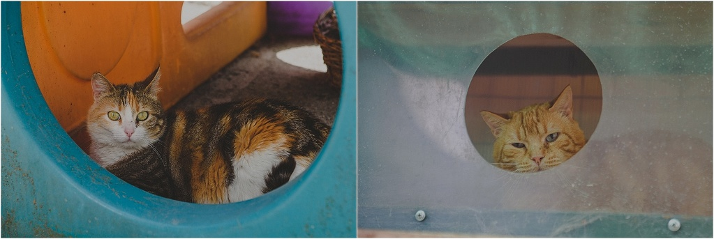 Animal Photography >> Cats