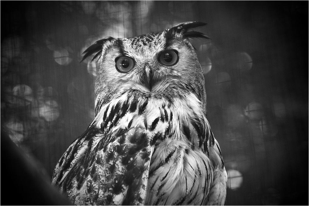 Animalia_Project_0011.jpg