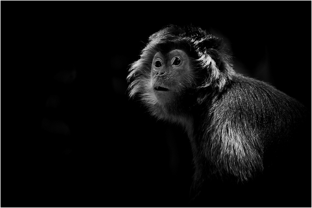 ANIMALPHOTOGRAPHY_MONKEYS_0001