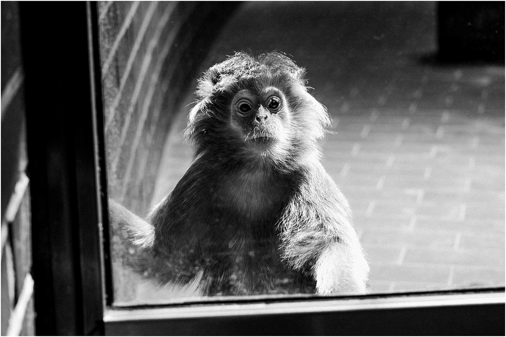 ANIMALPHOTOGRAPHY_MONKEYS_0003