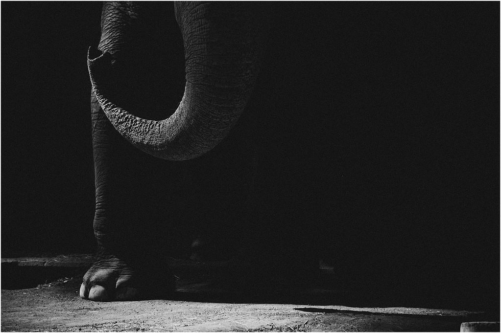 When Elephants Weep.