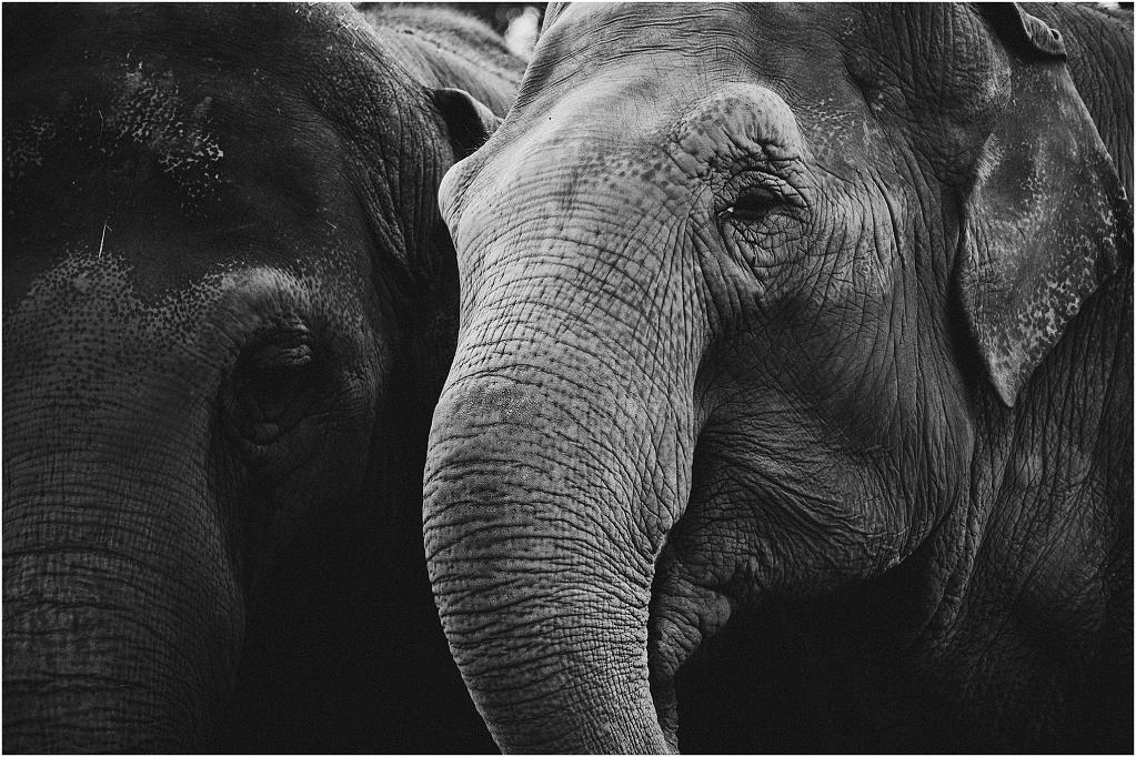 Elephants_0003