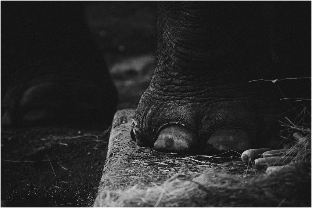 Elephants_0004