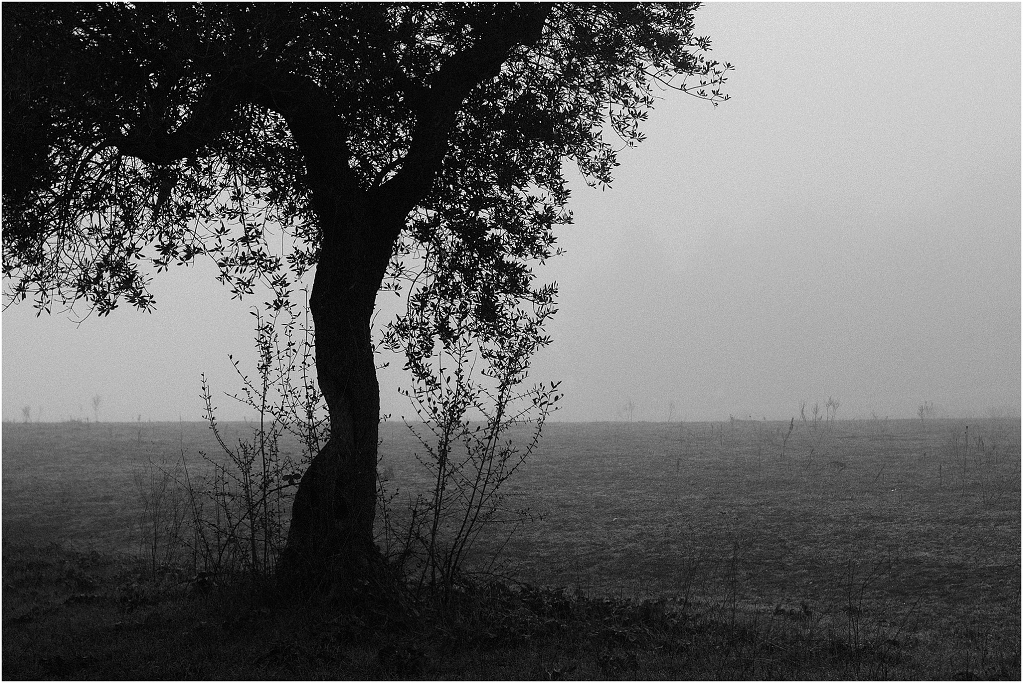 tales of fog and olive trees_0001
