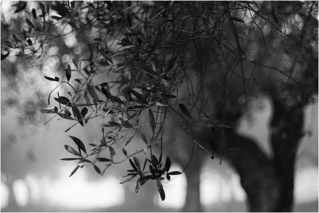 tales of fog and olive trees_0002