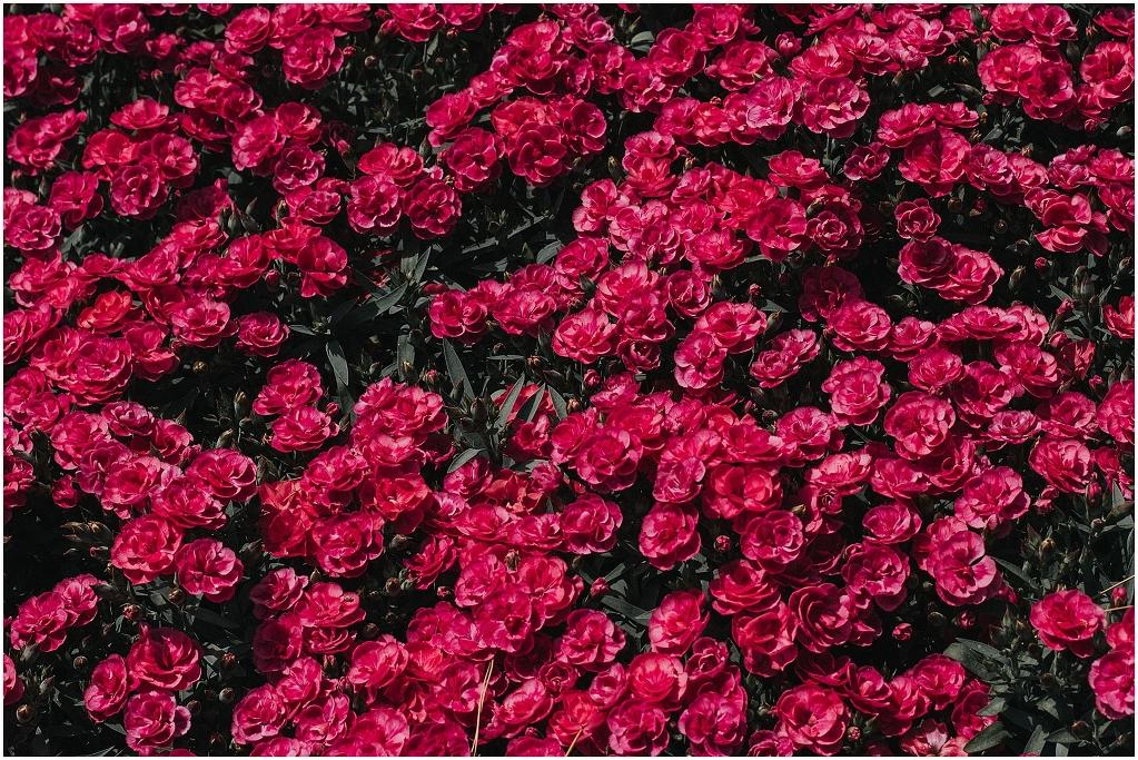 giardini-landriana-2284