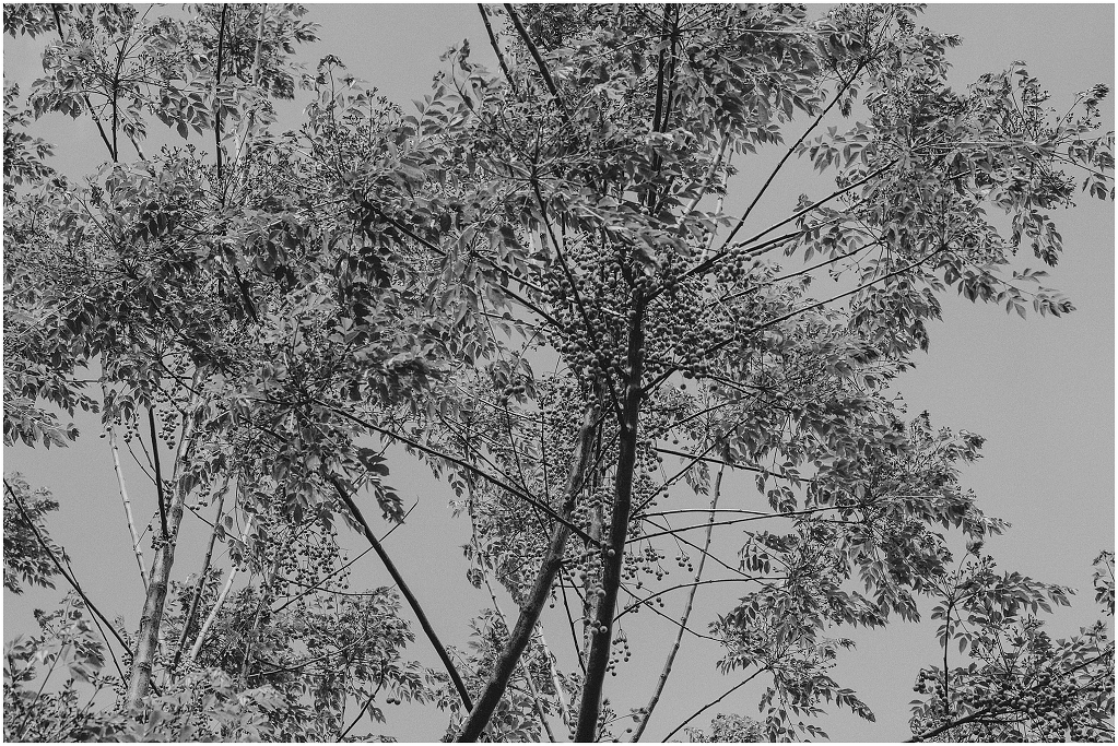 giardini-landriana-2292