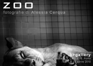 ZOO Alessia Cerqua