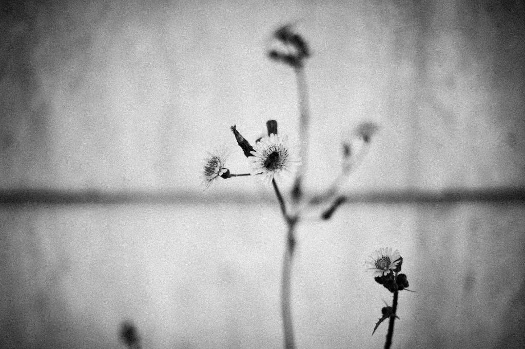 black garden-9048
