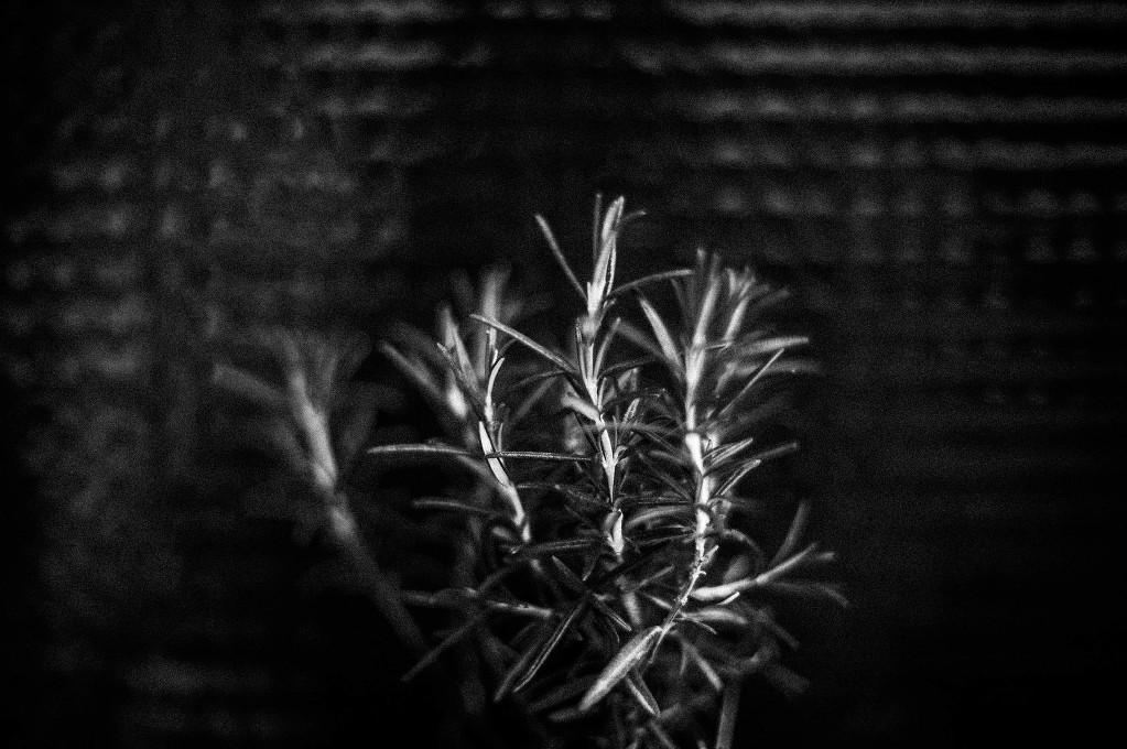 black garden-9062